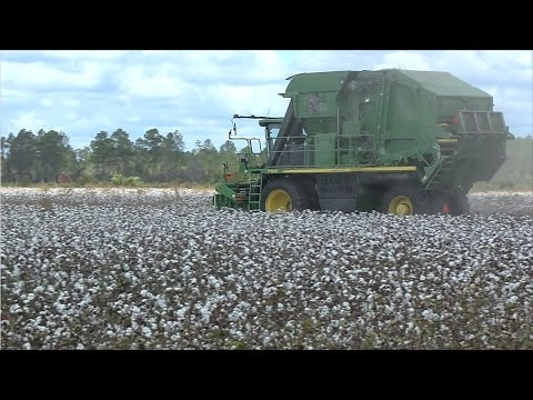 2016 Cotton Harvest Is Underway In South Georgia
