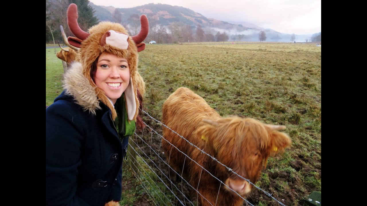 Visiting The Highlands Hairy Coo Edinburgh Tour 2014