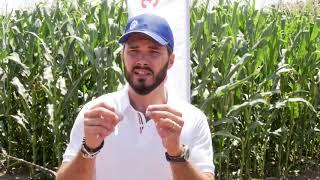 Успешно земеделие - броят от 22.08.2019