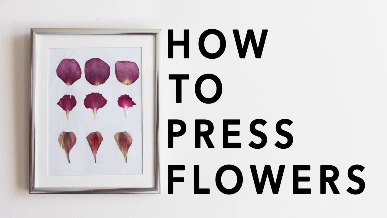 How To Press Flowers Diy Mothers Day Gift Youtube