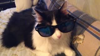 Я крутой кот в очках