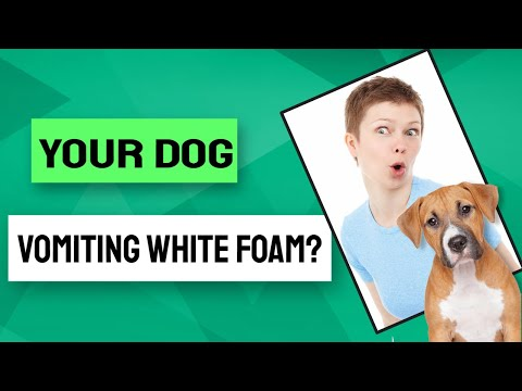 🤓What Are The Reasons Why Your Dog Vomiting White Foam? 🐶
