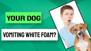 What are the reasons why your dog vomiting white foam?
