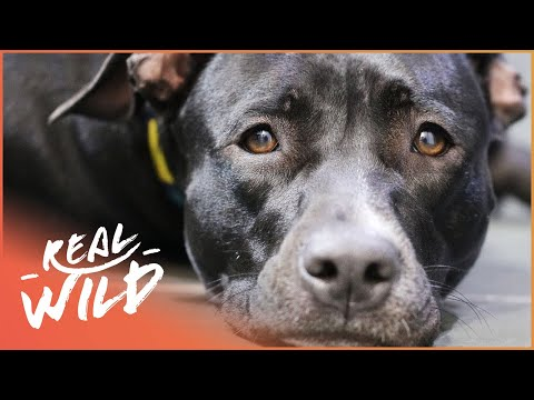 Comet Gets The Tellington Ttouch! | For The Love Of Dogs | Wild Things Documentary