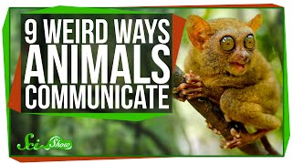 9 Weird Ways Animals Communicate