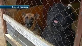 В Нижнем Новгороде дама организовала собачий приют в своем доме