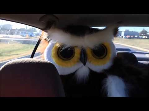 Owl Movie