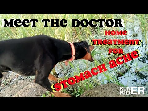 Dog's Stomach Upset  Do This.......Home Treatment For Ruined Digestion.....Doberman Eats Grass .....