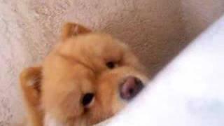 BamBam waking up mommy (Part II)