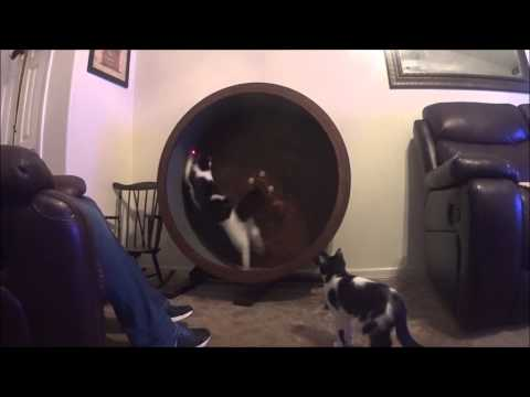 Run run splat: A Cat Fail
