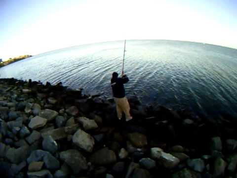Brian leopard shark fishing in the san francisco bay for Sf bay fishing report