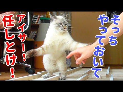 僕も一緒にやる!と飼い主の作業を手伝うフリして猫が遊びまくるんですが…