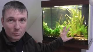 Aquarium für Anfänger - So war unser Einstieg