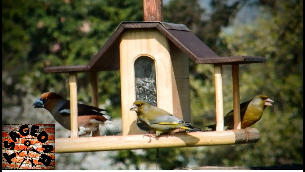 bright plans birds recycled for to image wonderful double bird full build platform choice simple how feeders zoom feeder