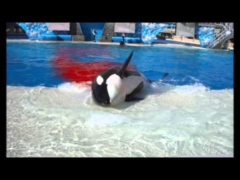 The Truth About Orca Captivity