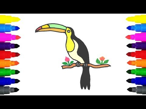 How to Draw a Toucan for Kids | Drawing and Coloring a Toucan for Kids