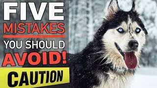 5 Mistakes To Avoid When Owning A Siberian Husky! (MUST WATCH!)