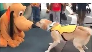 So Cute!!! Service Dog in training gets to meet his favorite character Pluto!