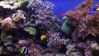 Baixar JVC GY HM100 Test - Underwater Symphony
