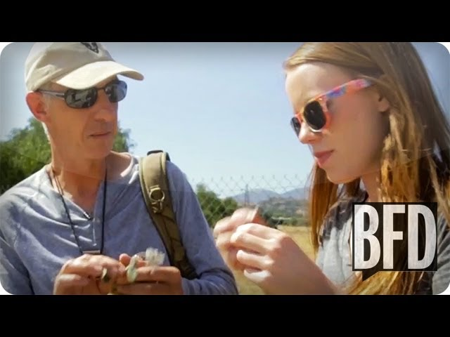 Foraging in Los Angeles | BFD | TakePart TV