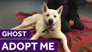 Adopt Ghost | Dogs | The Mayhew