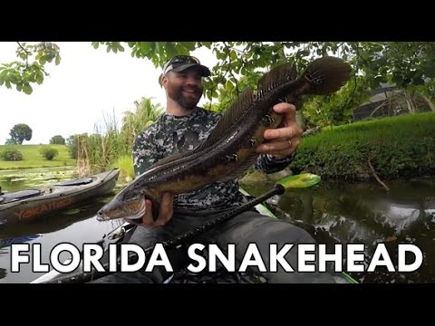 ActionHat presents: Canal Creepin' - Florida Snakehead Kayak Fishing