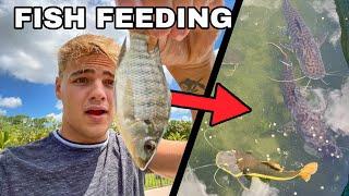 EPIC SLOW-MOTION BACKYARD FISH FEEDING!!