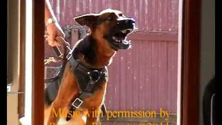 Best Protection Recorded German Shepherd Alarm