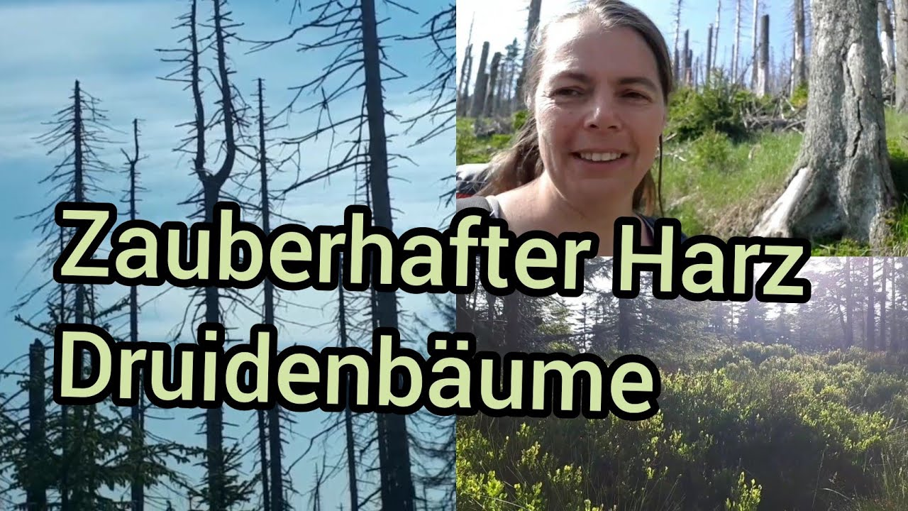 Zauberhafter Harz, Druidenbäume 🧙🏻♀️🌲
