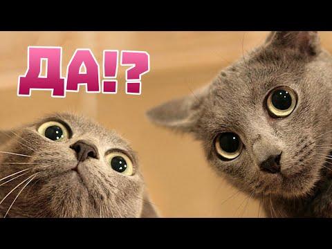 Способности кошек: 10 самых удивительных