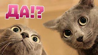 Удивительные факты о кошках.(Кошки, одни из самых любимых и популярных домашних животных, которые живут с людьми уже не одно тысячелетие...., 2015-06-13T14:58:11.000Z)