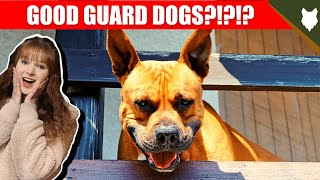 ARE BULL TERRIER GOOD GUARD DOGS?