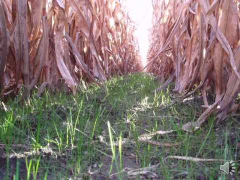 Jamie Scott   Cover Crops Benefits Outweigh the Investment