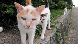 海沿いの道を歩いていたら野良猫が次々とモフられにきた