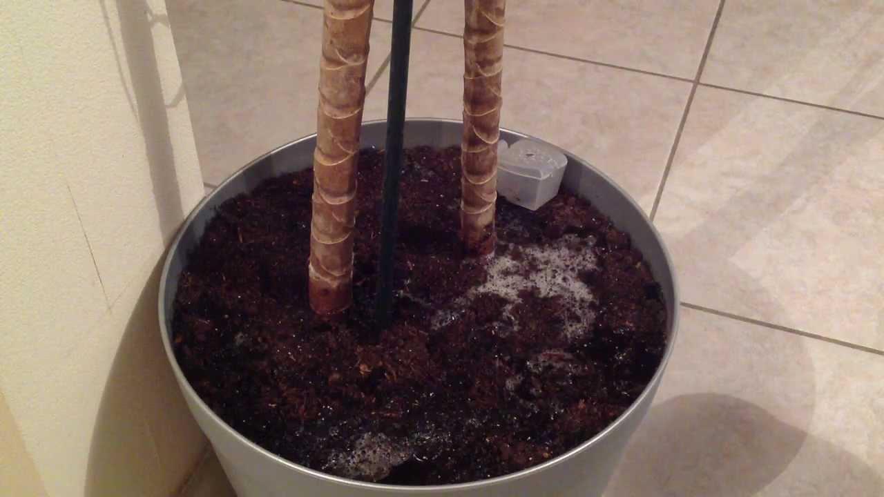 faire un engrais naturel conseils jardinage plantes youtube. Black Bedroom Furniture Sets. Home Design Ideas