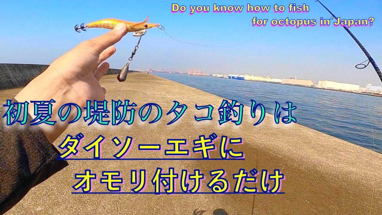 初夏の防波堤でダイソーエギを投げてタコをたくさん釣りました【Fishing with lures from a 100 yen store in Japan】