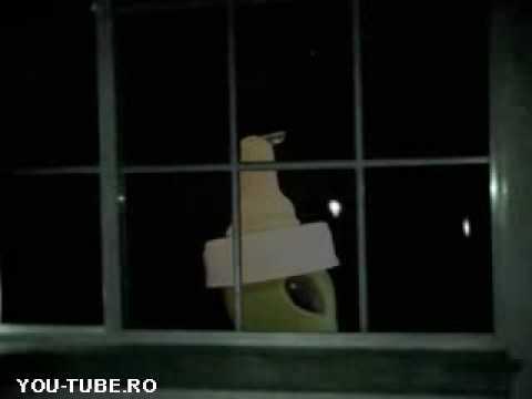 The Real Jeff Peckman Alien Footage - YouTube Real Alien Footage 2013