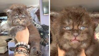 Fluffy Kittens Look Like Werewolves