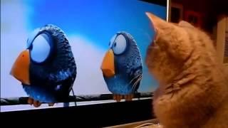 Кошка смотрит мультик