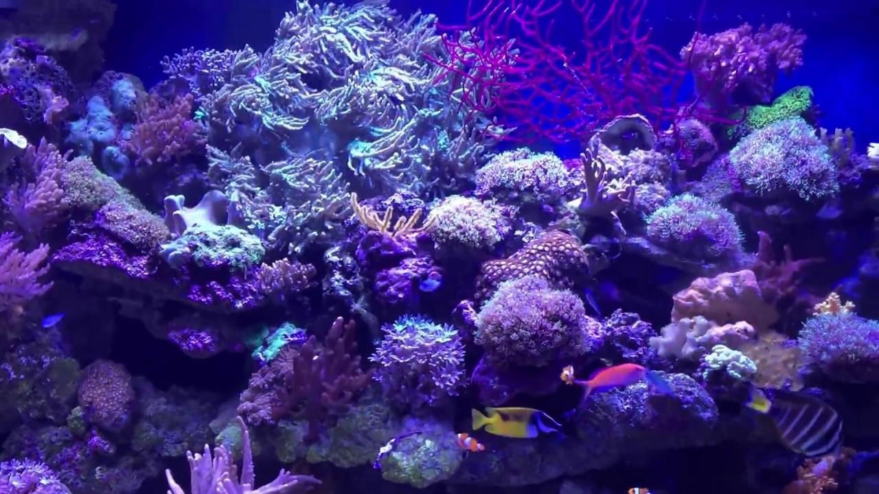 Reef aquarium argus aquarium design garden 807 066 for Garden aquarium design