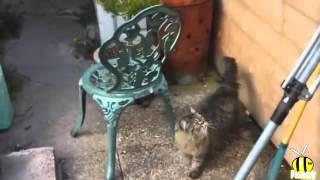 Die Größte Katze schlägt Fehl 2015