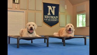 Sam (Labradoodle) Boot Camp Dog Training Video Demonstration