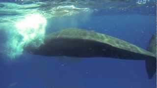 Whale Tale: Face to Face with Earth's largest Predator