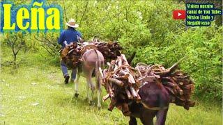 Gambar cover Acarreando LEÑA en los cerros de la Mixteca Oaxaca 🌄 🐎