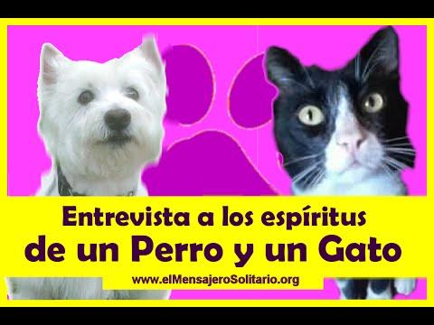 Entrevista a los espíritus de un Perro y un Gato | El Mensajero Solitario.org