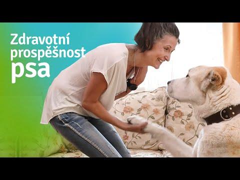 Pes: Jak prospívá našemu zdraví?