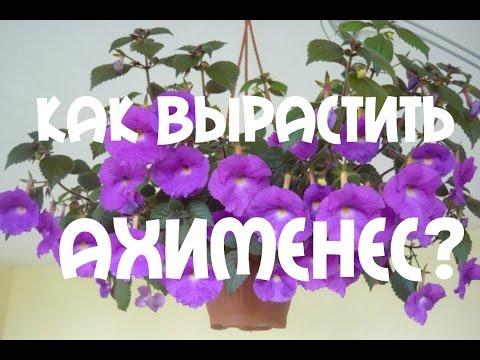 АХИМЕНЕС. СЕКРЕТЫ УХОДА