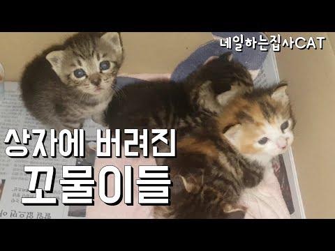 _rescue,kitten,straycat