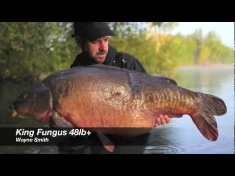 Sticky Baits - King Fungus at 48lb+ from Wraysbury 1