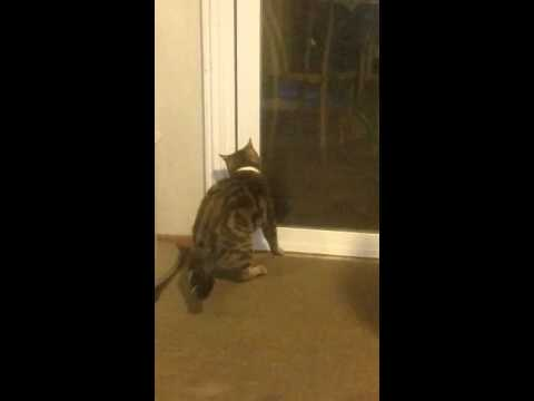 Cat manages to escape house on Caturday